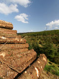 Pile Of Freshly Sawn Logs Stock Images