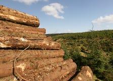 Pile Of Freshly Sawn Logs Stock Image