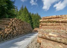 Pile Of Freshly Sawn Logs Royalty Free Stock Images