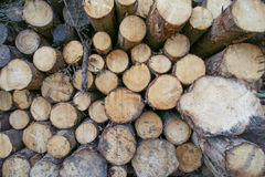 Pile Of Freshly Sawn Logs Royalty Free Stock Photography