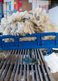 Pile of freshly shorn sheepskin on the scales Royalty Free Stock Photography