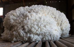 Pile of freshly shorn sheepskin on wool classing table Royalty Free Stock Photos