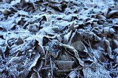 Pile of frozen leaves in my garden stock photo