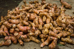 Pile of galangal as one of traditional tropical spices photo taken in Bogor traditional market Royalty Free Stock Photography