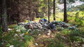 Pile of garbage in coniferous woods. Tilt up of coniferous forest hides huge piles of garbage under branches of trees plastic bottles glass rubber mats metal stock footage