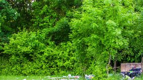 Pile Of Garbage On Green Grass In Forest. This is a shot from up to down of lush foliage on the trees in green forest to the garbage scattered around on the stock footage