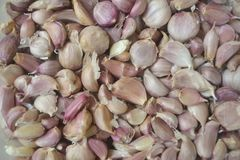 Pile of garlic cloves Royalty Free Stock Photography