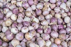 Pile of garlic Royalty Free Stock Photos