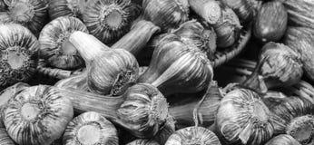 Pile of Garlic Stock Image
