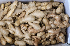 Pile of ginger Stock Photography