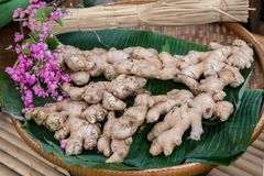 A Pile of Ginger for sell in fresh market . Golden brown ginger photo background. Ginger texture for cook book or food package. Spicy vegetable seasoning stock photos