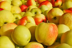 Pile of Golden apples Royalty Free Stock Photos
