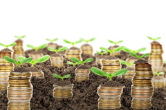 Pile of golden coins with ground and green plant Stock Image