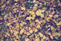 Pile of golden yellow autumn leaves on the grass, with radial blur. Stock Image