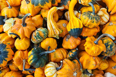 Pile of gourds background Stock Photos