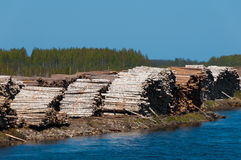 Pile of Graded and Numbered Debarked Logs. Russia stock images