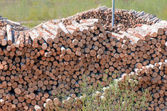 Pile of Graded and Numbered Debarked Logs Royalty Free Stock Images