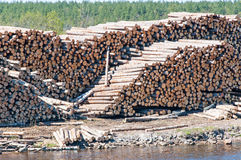 Pile of Graded and Numbered Debarked Logs. Russia stock photo