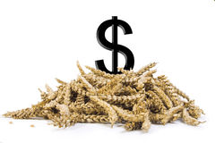 Pile of grain. With a dollar sign Stock Photo