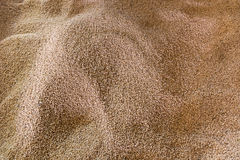 A pile of grain grains. In the warehouse Royalty Free Stock Photography
