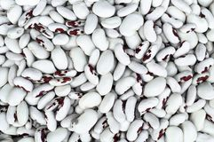 Kidney beans. Pile Great Northern Beans. on a gray background. Place for text royalty free stock photography