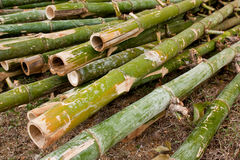 Pile of green bamboo Royalty Free Stock Photos