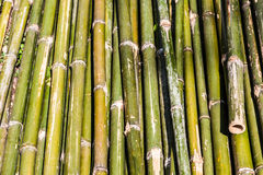 Pile of green bamboo wood Royalty Free Stock Image