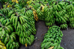 Pile of green bananas outdoors Royalty Free Stock Photography