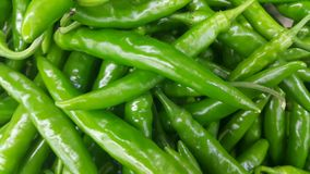 Pile of green chili pepper in harvest season placed in a market. Close up view of a pile of green chili pepper in harvest season placed in a market or bazaar for stock photo