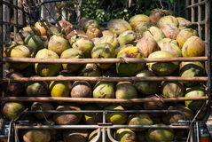 Pile of green coconuts. In the truck rear Stock Photo