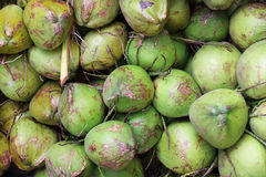Pile of green coconuts for pattern and background Royalty Free Stock Photos