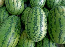 Pile of green with dark green stripes rind oval shape ripe Watermelons Royalty Free Stock Photography