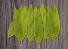 Pile of green leaf  isolated on wooden Stock Photography
