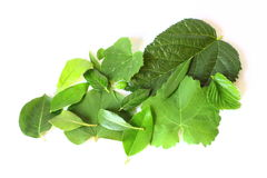 Pile of Green Leaves Stock Image
