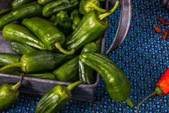 Pile of green Padron peppers Royalty Free Stock Photos