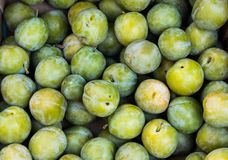 Pile of green plums. Pile of green juicy plums on the market to buy for cooking or decoration Royalty Free Stock Photo