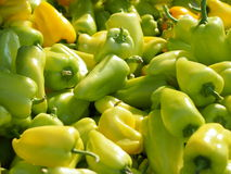 Pile of green sweet peppers. Pile of green and yellow sweet peppers royalty free stock photography