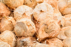 Pile of hairy brown coconuts, coconut shell in Thailand. Stock Image