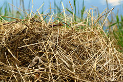 Pile of hay Stock Photos