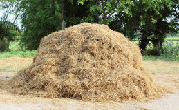 A pile of hay. On the agricultural field Royalty Free Stock Photo