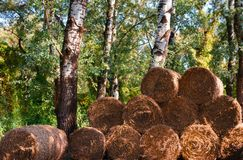 Pile of hay,hay prepared and stacked in the forest. Pile of hay with autumn sun, hay prepared and stacked for use, hay with sun light reflections royalty free stock photo