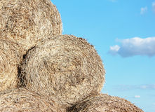 Pile of hay. Hay piles in the blue sky background royalty free stock photo
