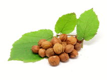 Pile of hazelnuts and hazel twig Stock Photography