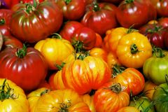 Pile of Heritage Tomatoes Royalty Free Stock Photo