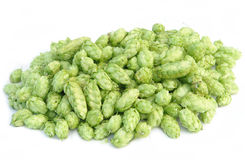 Pile of hops Royalty Free Stock Image