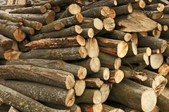 Pile of hornbeam chopped logs. Big pile of hornbeam chopped logs for firewood stock photography