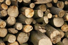 Pile of hornbeam chopped logs close-up Stock Photos