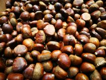 Pile of horse chestnuts Royalty Free Stock Photography