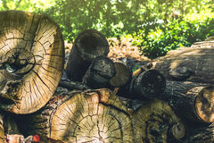 Pile of huge timber logs Royalty Free Stock Photography