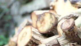 Pile irregolari di legno